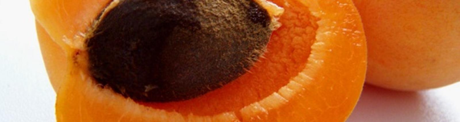 Bittere Aprikosenkerne